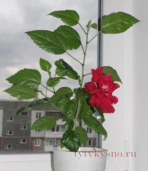 http://tytvkysno.ru/